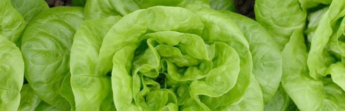 salade-h