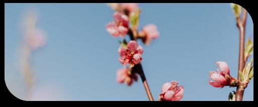 biosmart-fleurs-2