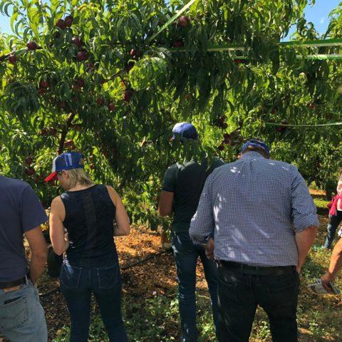 Assurer la qualité des cultures arboricoles grâce à Moka